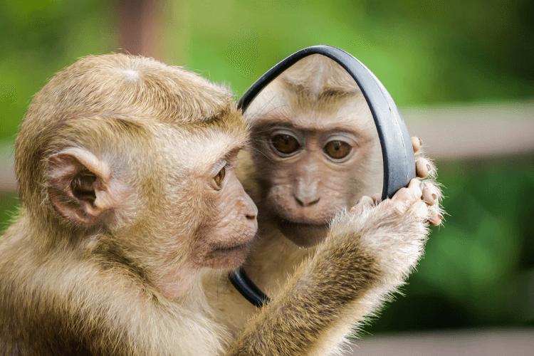 aap met spiegel zelfreflectie